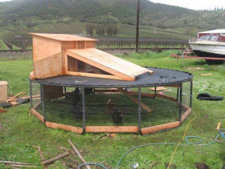 trampoline als kippenren